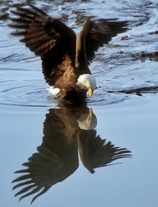 eagle_reflection_preview
